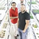 Identifican un factor que organiza el crecimiento de las plantas