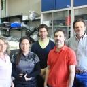 Investigadores argentinos descubren que la luz es una pieza clave de la relación simbiótica entre una bacteria y las arvejas