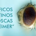 """Científicos argentinos crean moscas """"con Alzheimer"""""""