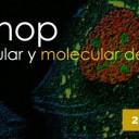 """Workshop de """"Biología Celular y Molecular del ARN"""" se realizará a fines de abril en el Instituto Leloir"""