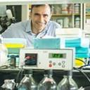 Científicos del Leloir buscan sembrar cultivos a densidades aún más altas