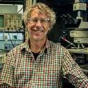 Científico del Instituto Leloir recibe subsidio internacional para estudiar la plasticidad y el envejecimiento cerebral