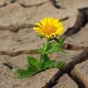 El Instituto Leloir en el Día internacional contra el Cambio Climático