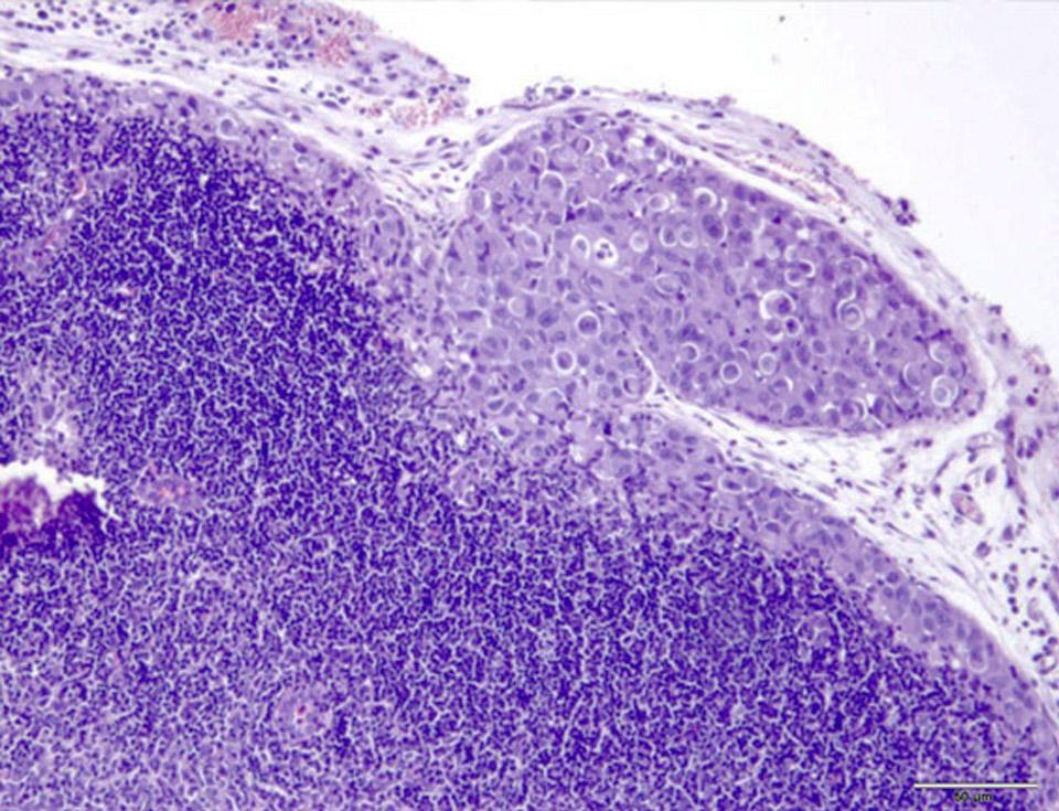 Imagen microscópica del estudio.