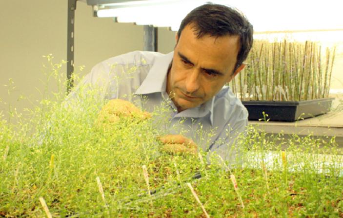 El Dr. Jorge Casal en el fitotrón de la Fundación Instituto Leloir.