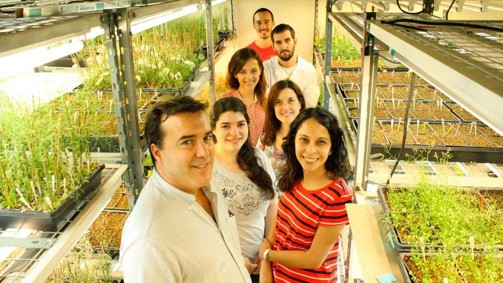 El doctor José Manuel Estévez, jefe del laboratorio Bases Moleculares del Desarrollo Vegetal en el Instituto Leloir e investigador independiente del CONICET, e integrantes de su grupo.