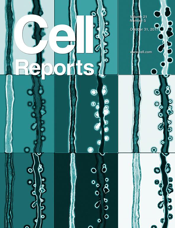 El trabajo liderado por el doctor Alejandro Schinder es tapa de la revista Cell Reports.
