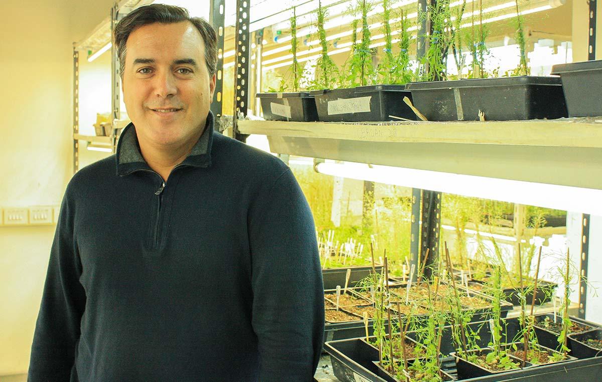El doctor José Manuel Estévez,jefe del Laboratorio Bases Moleculares del Desarrollo Vegetal de la Fundación Instituto Leloir e investigador del CONICET.