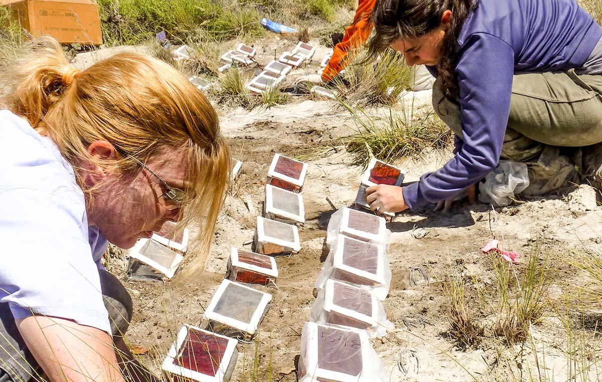 Amy Austin y su equipo hacen experimentos usando filtros de plástico para atenuar la radiación solar de longitudes distintas para evaluar el efecto sobre el ciclo de carbono (principalmente la descomposición) en un ecosistema semiárido de Meliquina, Provincia de Neuquén.