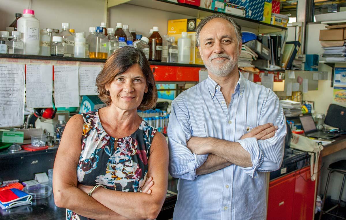 Los doctores Eduardo Castaño y Laura Morelli, investigadores de la Fundación Instituto Leloir, estudian la enfermedad de Alzheimer.