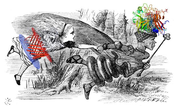 """Ilustración original de John Tenniel para el libro """"A través del espejo y lo que Alicia encontró allí"""" de Lewis Carroll adaptada por Daiana Capdevila con proteínas secuestradoras de metales humanas y bacterianas. La escena representa la Hipótesis de la Reina Roja, una hipótesis evolutiva inspirada en la frase que ésta le dice a Alicia: """"Para quedarte donde estás tienes que correr lo más rápido que puedas"""", y que refleja la batalla por los nutrientes que libran las células y las bacterias."""